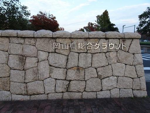 アメリカ楓0up.JPG